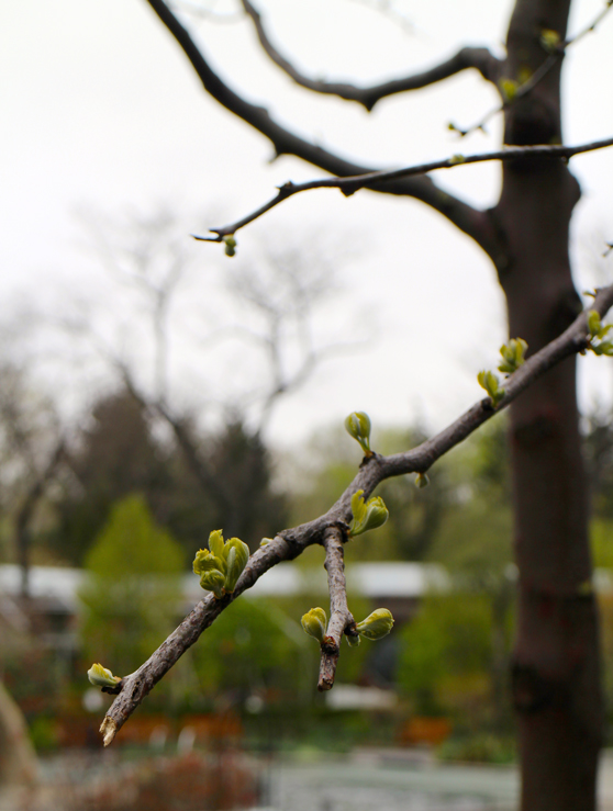 nyc-streets-central-park-buds